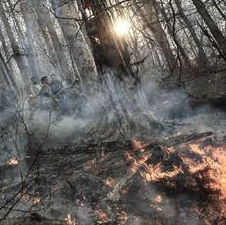 نگاره:  فصل سوختن پرندگان و حیوانات/جنگلها آمادهی آتش میشوندخبرگزاری مهر، گروه جامعه- مسعود بُربُر: خط سرخ آتش از میان علفهای خشک و کوتاه روی تن کوه بالا میرود. درختها یکی یکی گُر میگیرند و سرخ میشوند و شاخههایشان از درون میپکد و با صدای ترق و توروق جدا میشود و میافتد. بوی دود و گوشت سوخته پرندگان و حیوانات همه جا را گرفته است و محیطبانان با ترکههای چوب و بیل توی سر آتش میزنند و گاه گاه دبه آبی هم به دستشان میرسد تا روی شعلهها بپاشند. یک هفته بعد، لاشه ماری سوخته در خود پیچیده و تخمهای پختهی پرندگان از پوست بیرون زده است، تن کوه سیاه و درختان زغال شدهاند.@masoudborborhttp://www.mehrnews.com/news/3989627/My report of annual fire in Iranian forestsMehr News, Masoud Borbor: The red frontline of fire goes up the hill through the dry grass. The woods got hot flashes and roasted, their branches disintegrating and fall. The smell of burnt meat of birds and animals is eveywhere and the rangers hit twigs on fire and they occassionaly are given a gallon of water to fight the fire. A week later, a burnt snake's body is twisted and the boiled eggs of birds are out of the nests. The body of the hill is black and the woods has become charcoal.
